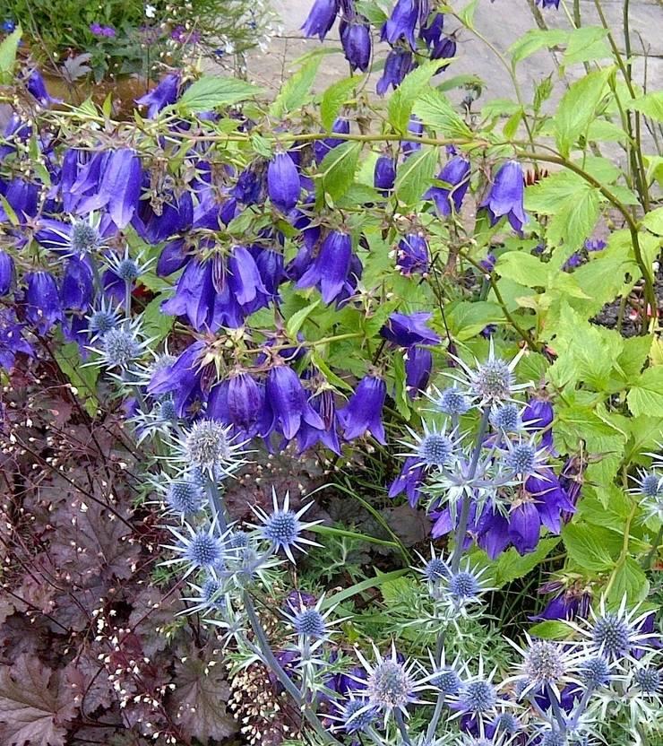 Mixed blues:  Garden by Anne Macfie Garden Design