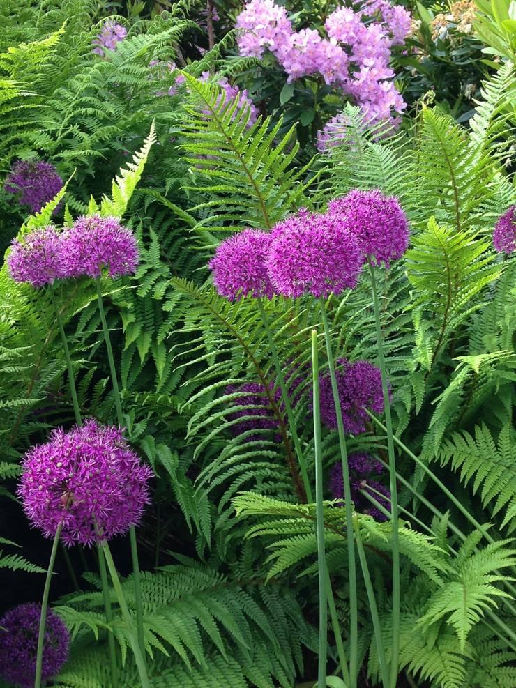 Pom pom:  Garden by Anne Macfie Garden Design
