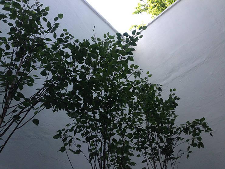 minimal city courtyard:  Garden by Claire Potter Design