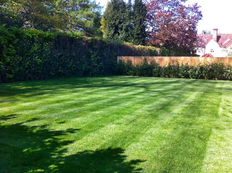 The lawn: modern Garden by Zodiac Design