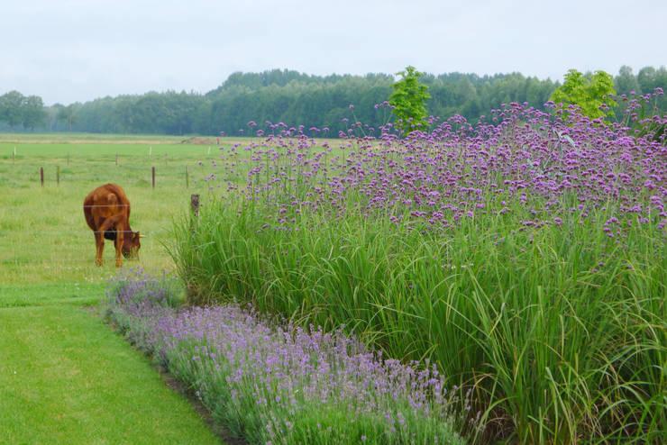 Boerderij tuinen & landelijke tuinen: moderne Tuin door Meeuwis de Vries Tuinen