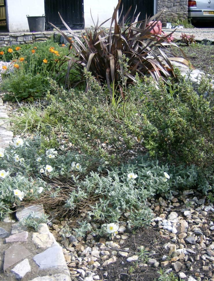 Planting:   by Christine Wilson Gardens