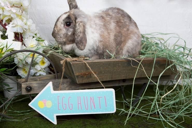 Pastel Egg Hunt Sign:  Garden  by Sass & Belle