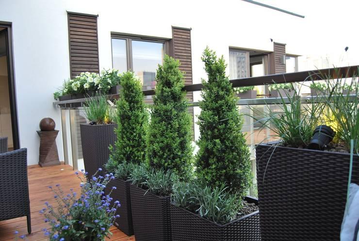 Aranżacja balkonu <q>po francusku</q>: styl , w kategorii Taras zaprojektowany przez Ogrody Przyszłości