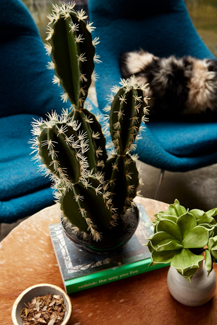 Sinai faux cactus:  Interior landscaping by Abigail Ahern