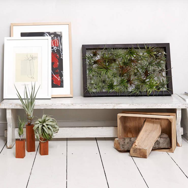 Lebendiges Wandbild mit Luftpflanzen:  Wände & Boden von EVRGREEN Vertriebs GmbH