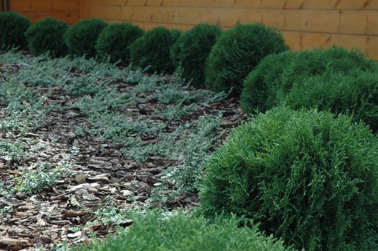 ogród na wsi: styl , w kategorii  zaprojektowany przez greenin