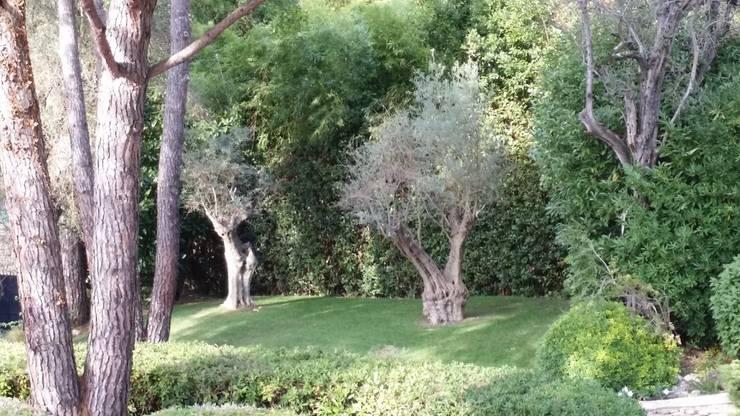 Jardin Cannes : Jardin de style  par Nazarian Espaces Verts