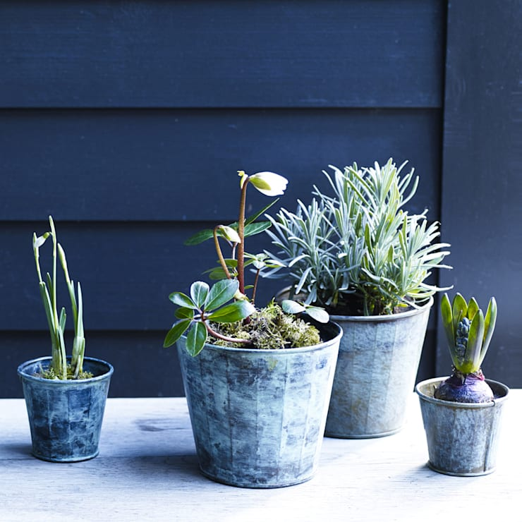 Jardines de estilo rústico por Rowen & Wren