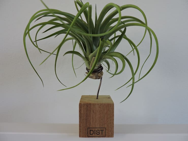 Dïst Airplant Eik:   door Dïst Dutch Design, Tropisch