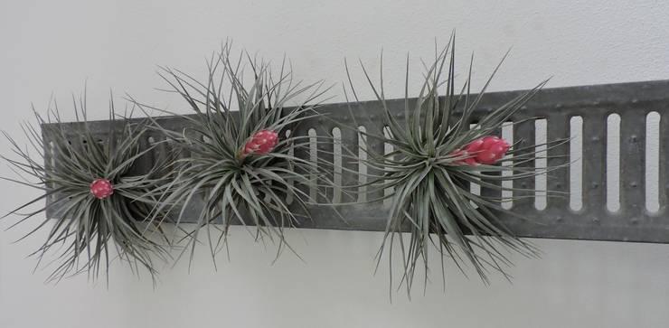 Dïst Airplant Zink:  Serre door Dïst Dutch Design, Industrieel