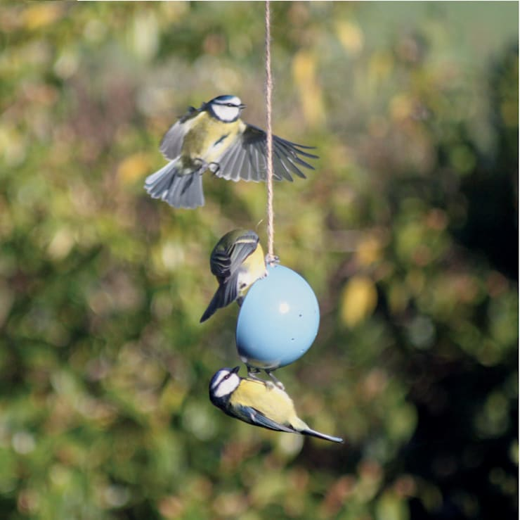 Eco Bird Cake Kit:  Garden  by ashortwalk