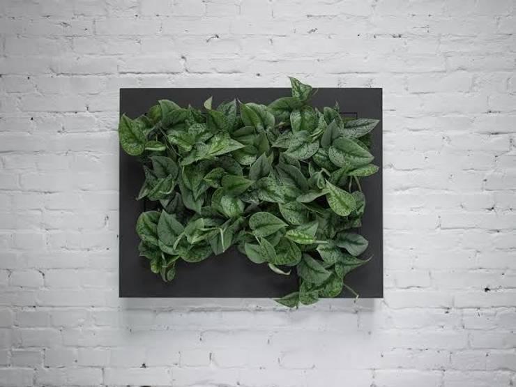 Florama czarna duża: styl , w kategorii Zieleń wewnątrz zaprojektowany przez FLORABO2