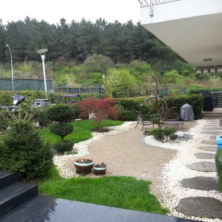abelia peyzaj – mayavera:  tarz Bahçe, Modern