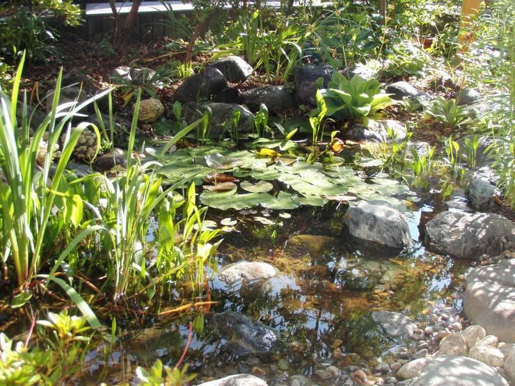 Projekty,  Ogród zaprojektowane przez jardinier Kirikui