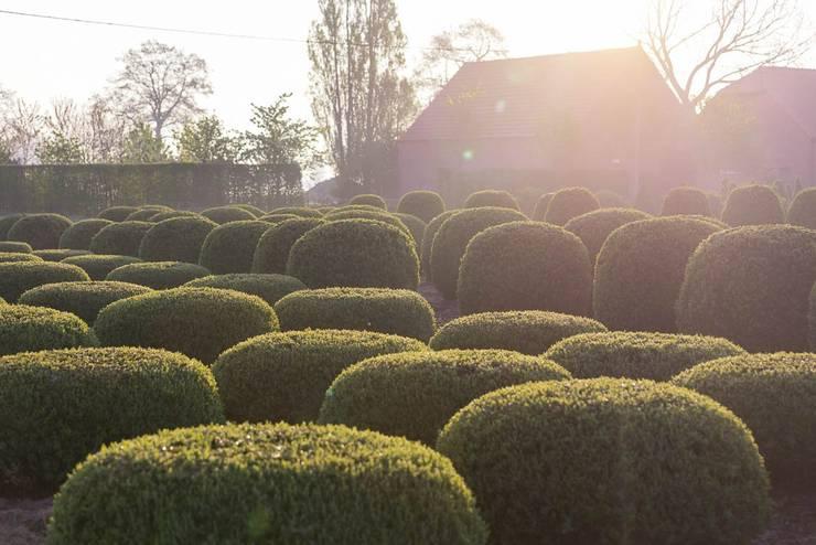 Assortiment de Boules: Jardin de style de style Minimaliste par Solitair