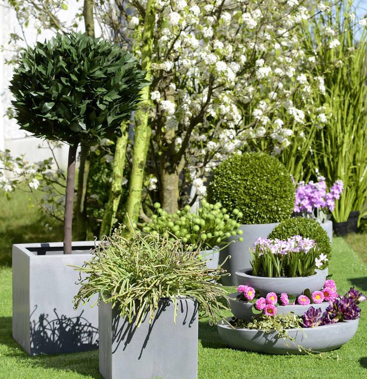 Pimp up your Garden: modern  door Groothandel in decoratie en lifestyle artikelen, Modern