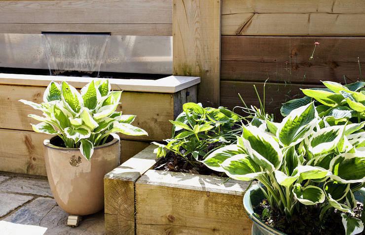 de estilo  de Susan Dunstall Landscape & Garden Design