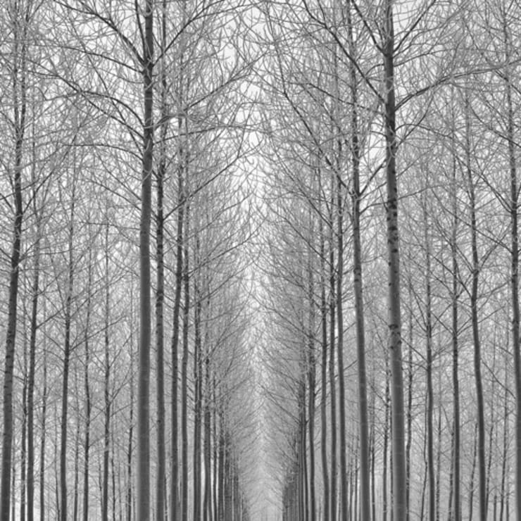Equilibrium by Doug Chinnery : modern  by King & McGaw, Modern