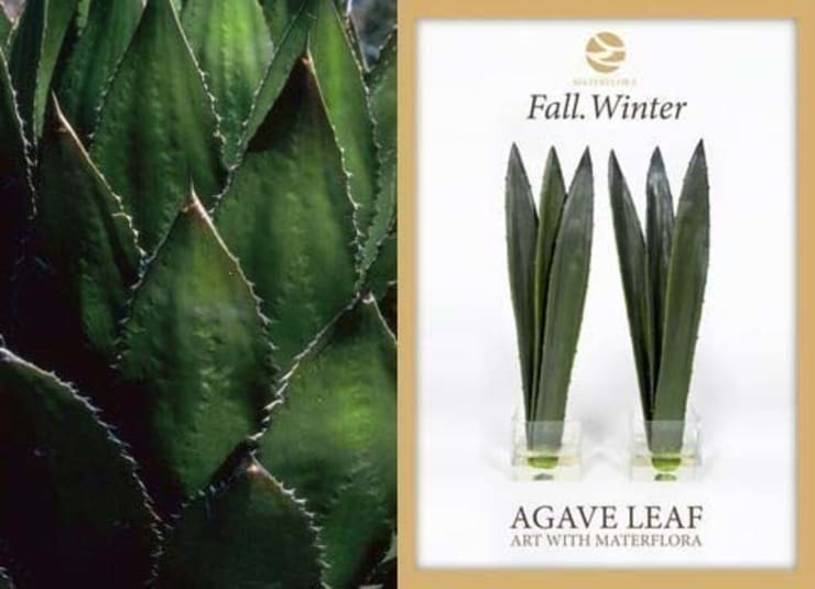 Agave Leaves arrangement: tropical  by Materflora Lda., Tropical
