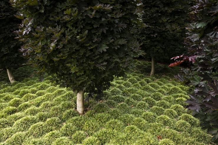 Garden  by Студия 'ART Story'