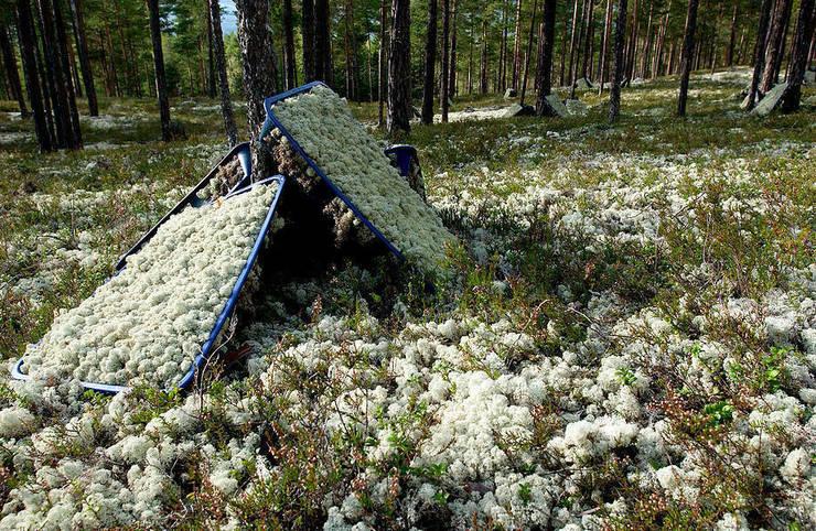 İskandinav Ormanlarından Canlı Tablolar – Canlı Tablolar  Bakım İhtiyacı Olmayan Mumyalanmış Bitkiler :  tarz İç Dekorasyon