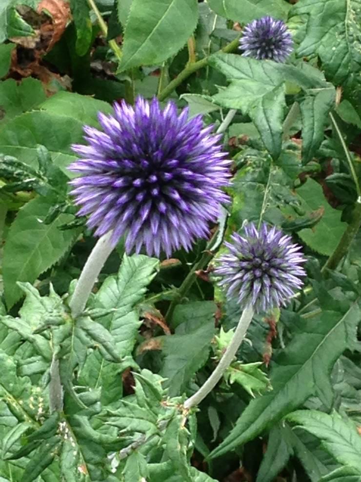 Planting:   by Anne Macfie Garden Design