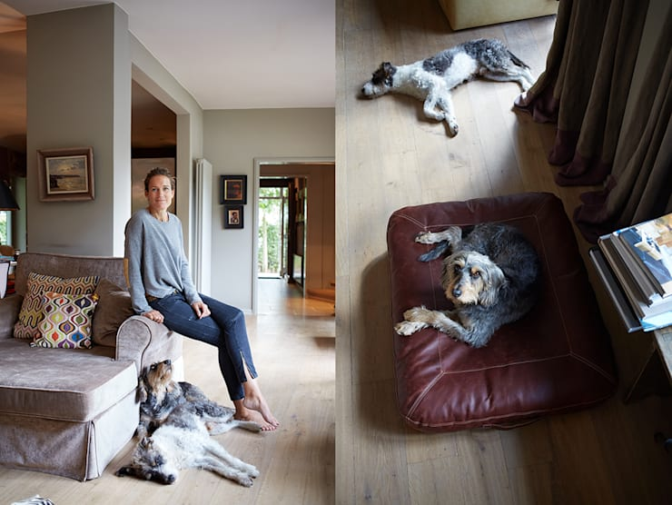 Salas de estilo moderno por Cloud 7 Finest Interiors for Dogs & Dog Lovers