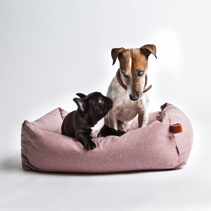 Livings de estilo moderno por Cloud 7 Finest Interiors for Dogs & Dog Lovers
