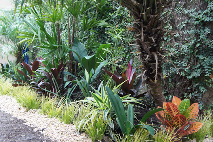 Jardín de Sombra Jardines tropicales de Estudio Nicolas Pierry: Diseño en Arquitectura de Paisajes & Jardines Tropical