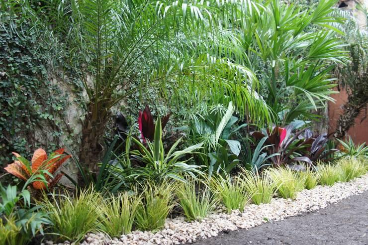Jardines de estilo tropical por Estudio Nicolas Pierry: Diseño en Arquitectura de Paisajes & Jardines
