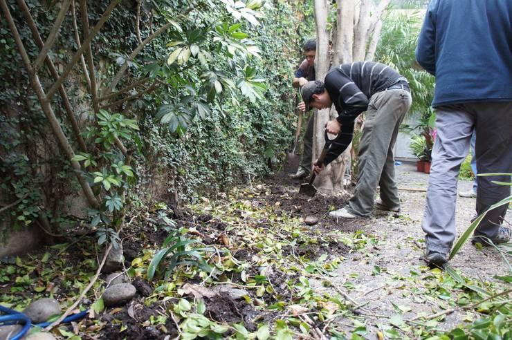 Jardín de Sombra:  de estilo  por Estudio Nicolas Pierry: Diseño en Arquitectura de Paisajes & Jardines,Tropical