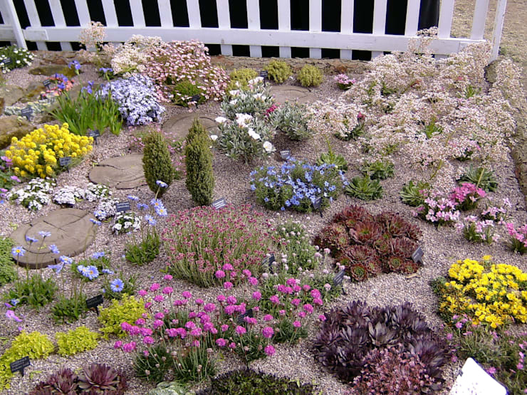 Create a colourful alpine garden.:  Garden by Ice Alpines