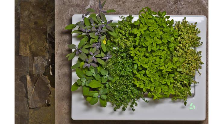 Florama - żywy obraz z roślinnością: styl , w kategorii Zieleń wewnątrz zaprojektowany przez FLORABO2