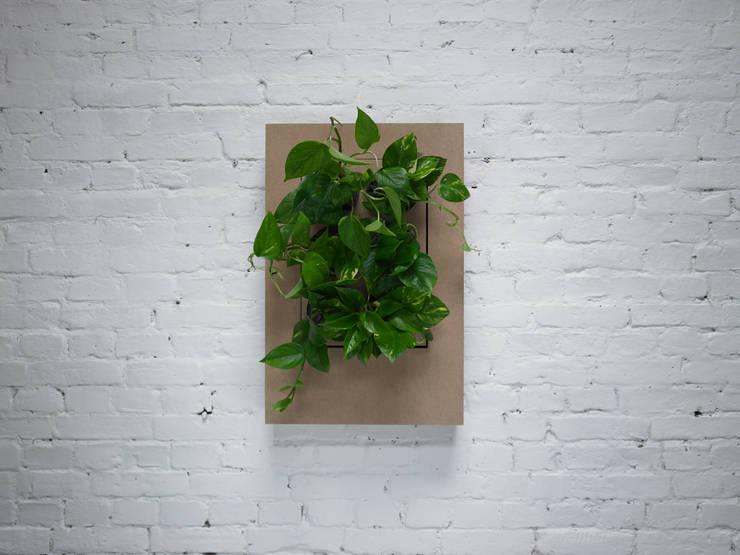Florama mała beżowa: styl , w kategorii Zieleń wewnątrz zaprojektowany przez FLORABO2