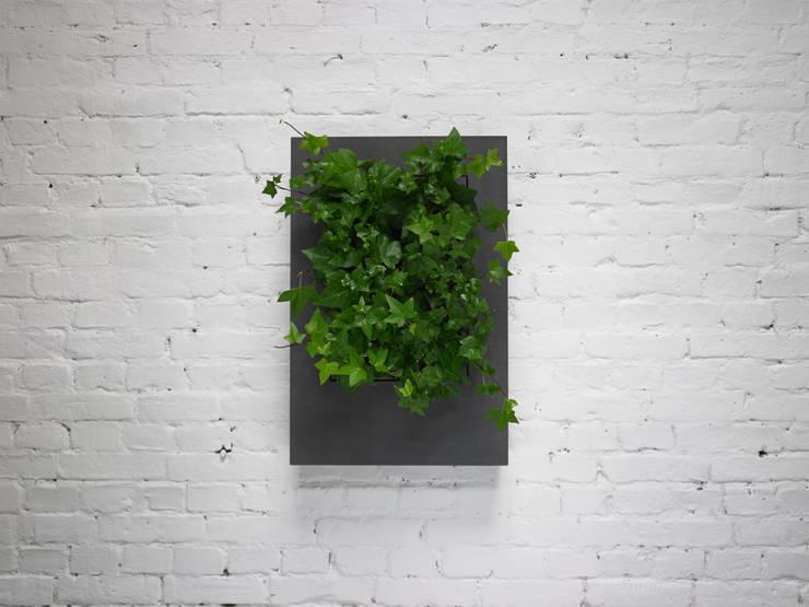 Mała Florama czarna: styl , w kategorii Zieleń wewnątrz zaprojektowany przez FLORABO2