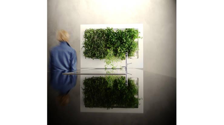 Florama duża biała: styl , w kategorii Zieleń wewnątrz zaprojektowany przez FLORABO2