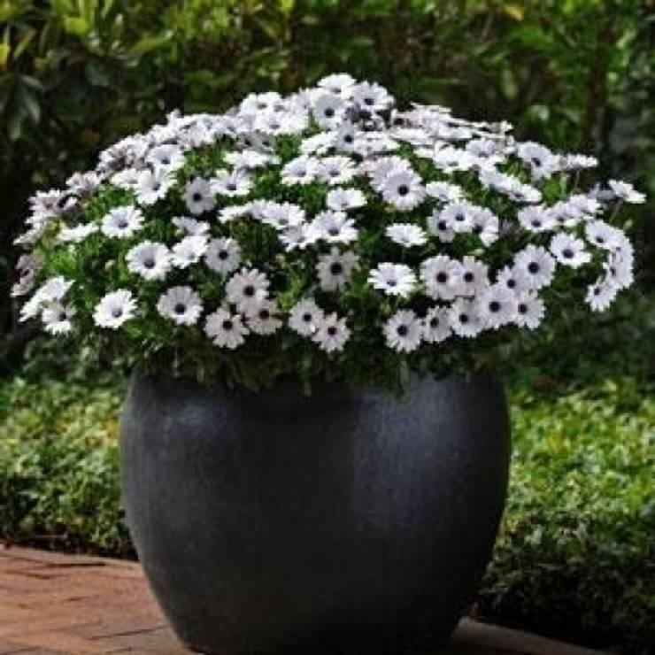 Fleurs en pots pour balcon et terrasse de my little jardin homify - My little jardin ...