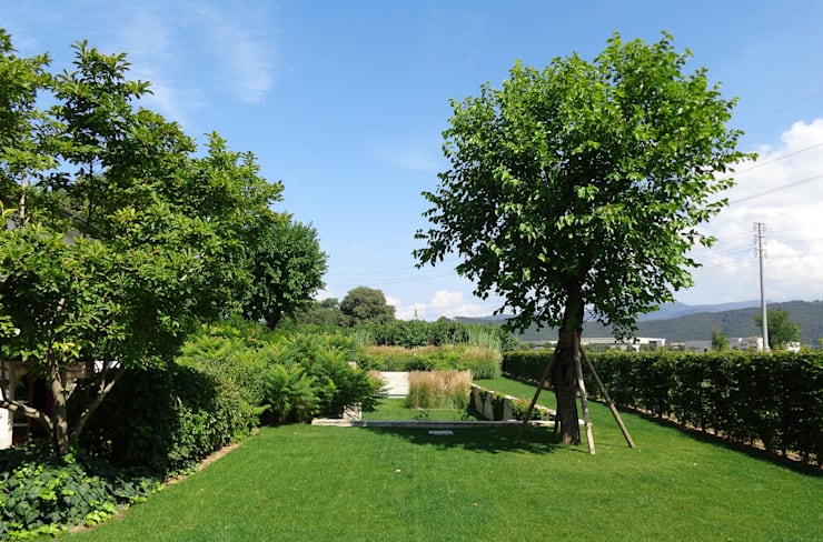 25 alberi da giardino da scegliere per piccoli spazi - Alberi da piantare in giardino ...