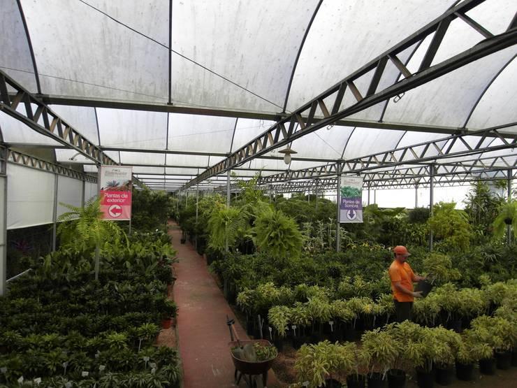 Setor de Plantas Internas: Espaços comerciais  por Blumengarten Plantas e Flores LTDA,