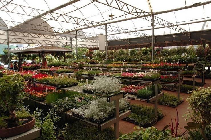 Setor de Caixarias: Espaços comerciais  por Blumengarten Plantas e Flores LTDA,