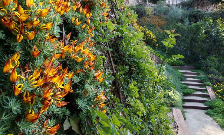 Vegetación para pendientes fuertes: Jardines de estilo mediterráneo de LANDSHAFT