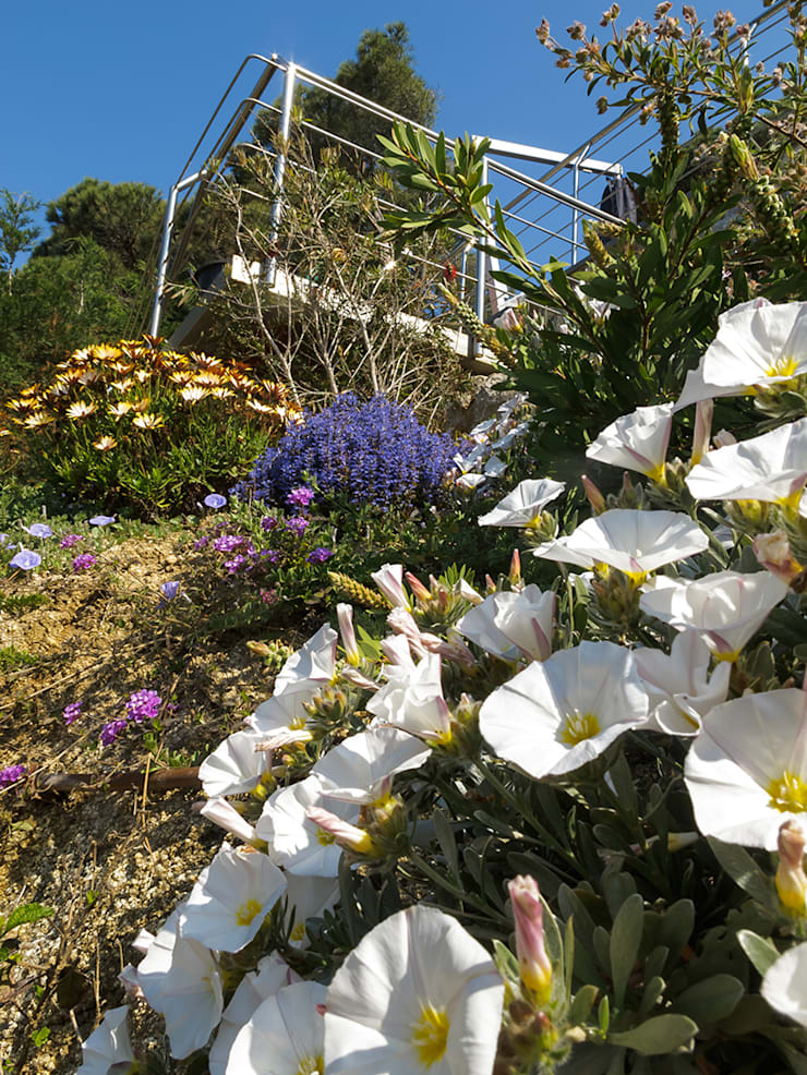 Vegetación de talud junto al mar: Jardines de estilo  de LANDSHAFT