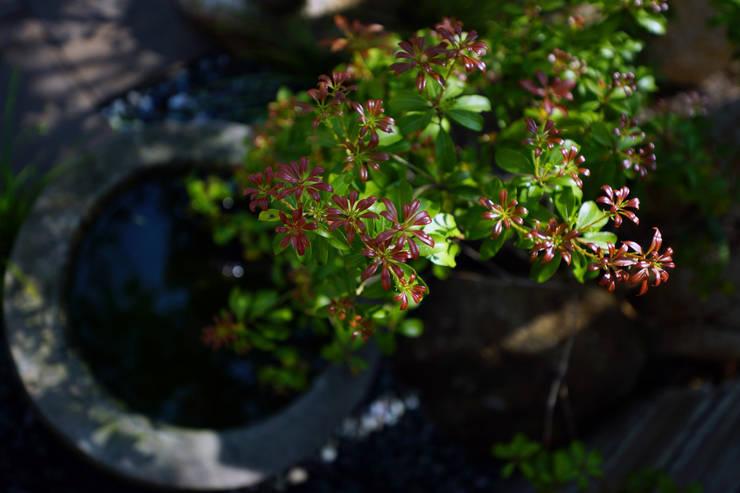 創作あふれる和の庭 2014~: にわいろSTYLEが手掛けた庭です。