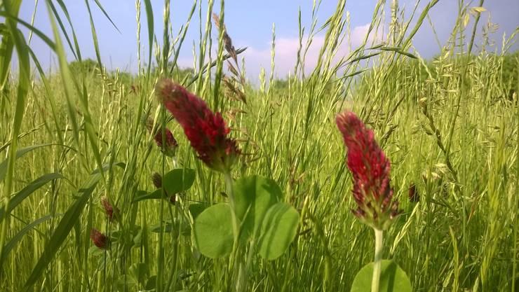 Łąka to ważny element ogrodu. Każdego roku zaskakuje nowymi kwiatami...  : styl , w kategorii  zaprojektowany przez Miejskie Ziele