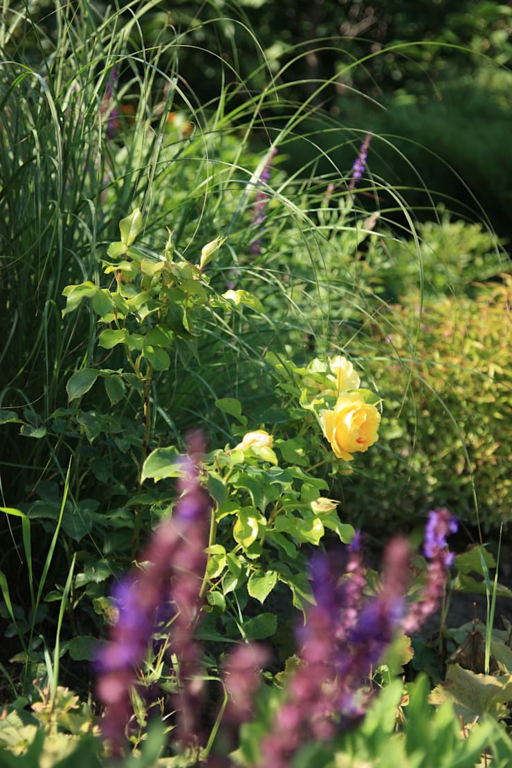 Rabata z trawami i różami Austina.: styl , w kategorii  zaprojektowany przez Miejskie Ziele