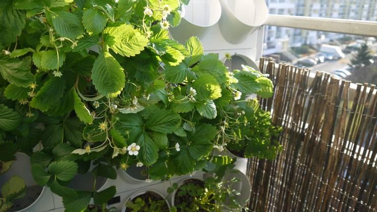Balcone, Veranda & Terrazzo in stile  di Pixel Garden