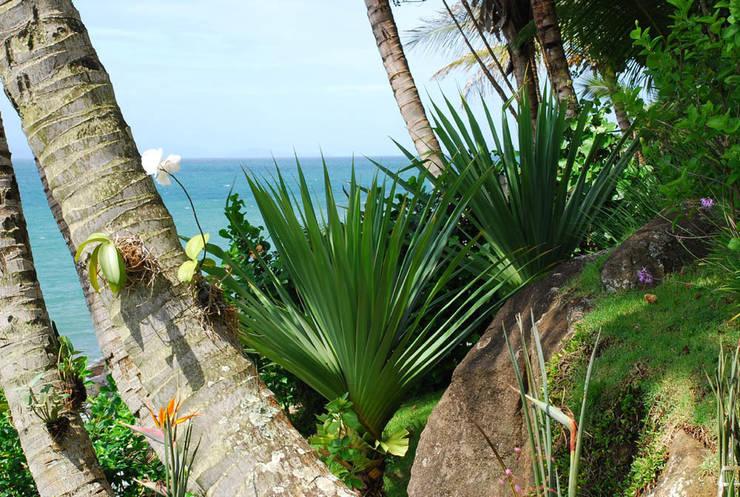 Residência FS – Ilhabela, SP: Jardins  por Gil Fialho Paisagismo