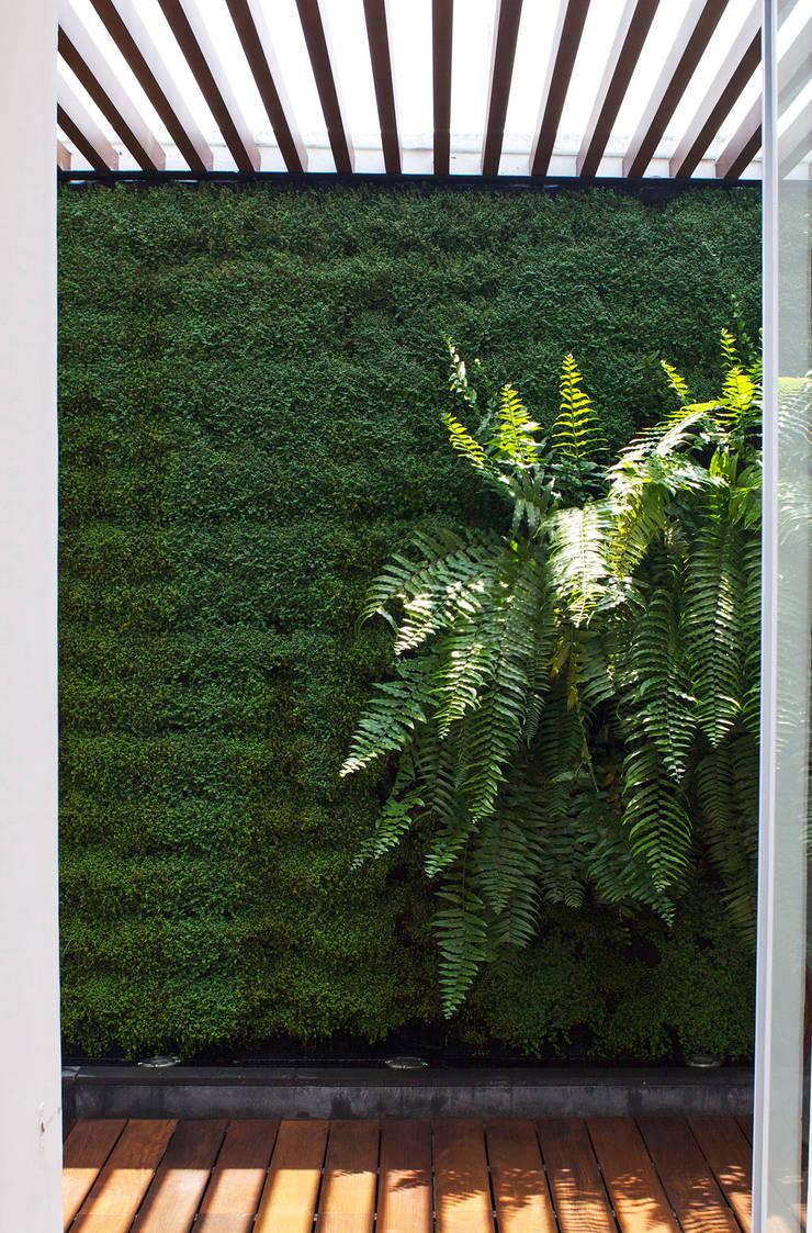 Сады в . Автор – DF ARQUITECTOS, Модерн