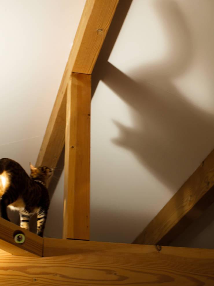 猫と暮らす: 篠田 望デザイン一級建築士事務所が手掛けたリビングです。